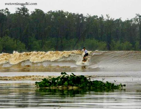 World record holder Serginho Laus surfs the Pororoca tidal bore wave past debris from the Amazon jungle on the Araguari river in northern Brazil