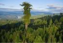дърво 1