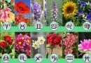 цвете зодия