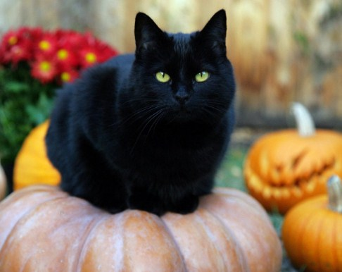 черна котка 1