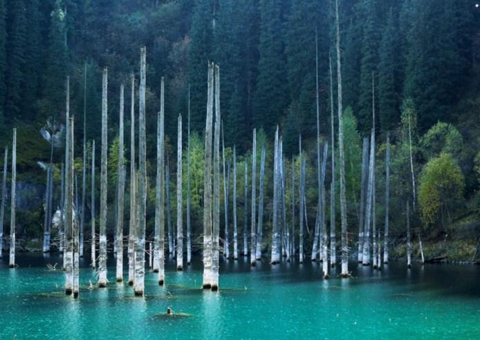 Потъналата гора